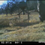 Bigfoot Caught On Deer Cam