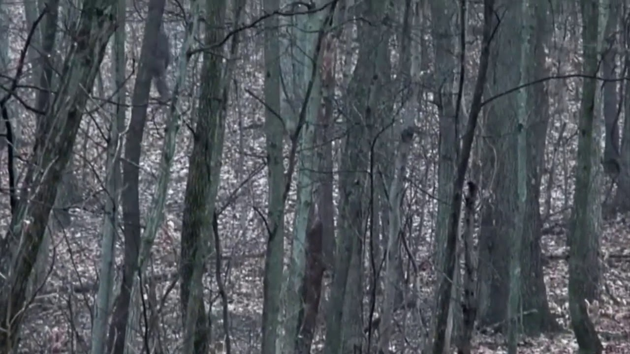 Bigfoot Sighting Filmed In a Forest In Eastern Ohio
