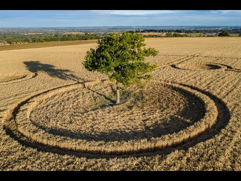 Crop Circles Discovered Around a Tree – Potterne Field, Wiltshire, UK – 3rd August 2020